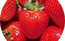 Maasikamoos marjadega