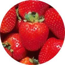 Maasikamoos